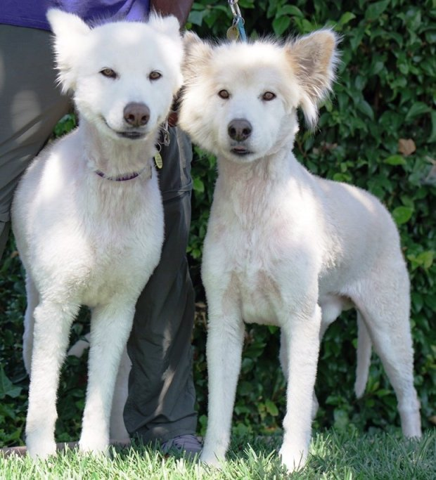 Ana and Zuni are NorSled's Pets of the Week for Oct. 21.