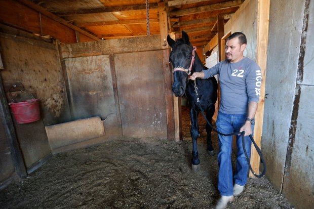 Efrain Schroeder brings his youngest horse Remmy out for some fresh air and sun at the horse boarding facility off Giant Road in North Richmond, Calif., on Friday, Nov. 18, 2016. The facility, that once housed more than 100 animals, is facing closure, after the city has cracked down on an illegal dumping operation it says was being run on the property. The horse stables have been there for at least the past 17 years. Schroeder says he may have to move to Tracy to find a boarding facility for his horses and an affordable home for himself close enough to care for them.(Laura A. Oda/Bay Area News Group)