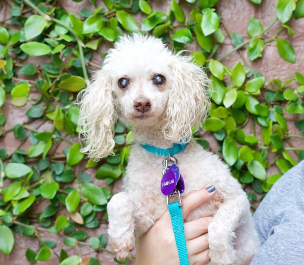 Finnigan is the Umbrella of Hope Pet of the Week for Jan. 6.