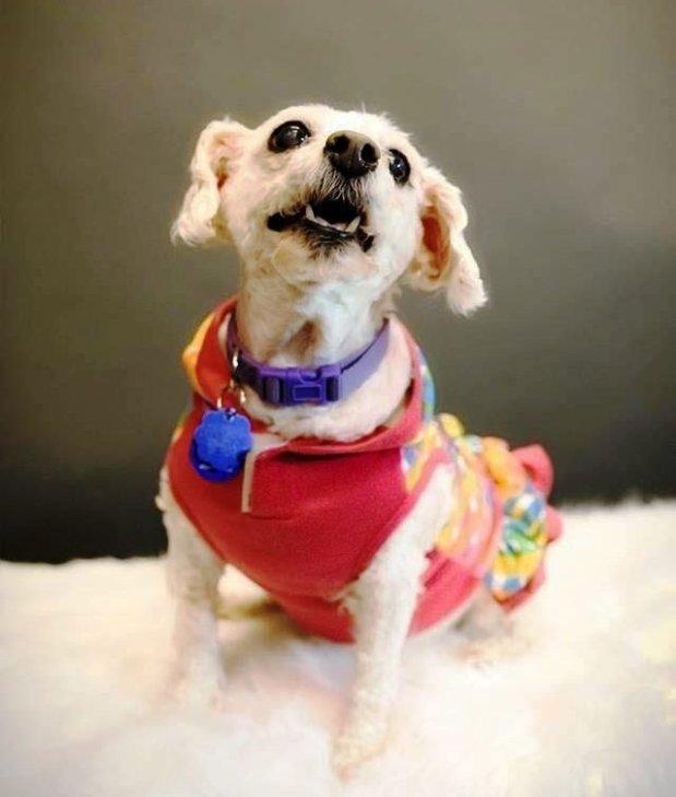 Aunt Jeni is Umbrella of Hope's Pet of the Week.Courtesy of Umbrella of Hope