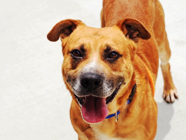 Cairo is Animal Services Pet of the WeekCourtesy of County Animal Services