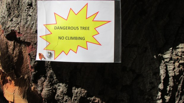 A sign warns patrons of Oakland's Dimond Park not to climb an unstable tree.