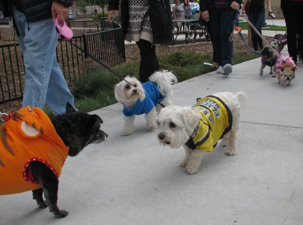 Dogs dressed in costumes parade in the annual Oakley Harvest Festival in2016. This year's festival is set for Saturday. COURTESY CITY OF OAKLEY