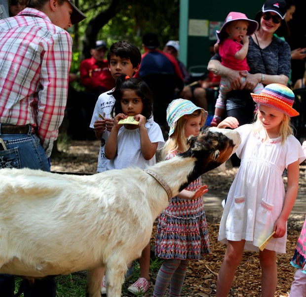 Zoe Freese, right, pets a goat during a Wildlife Festival at the Wagner Ranch Nature Area on Sunday, April 22, 2018, in Orinda, Calif. (Aric Crabb/Bay Area News Group)