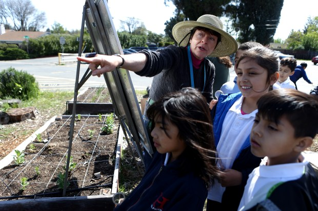 El Monte Elementary School garden educator Marian Woodard points to a bed of fava bean plants were ladybugs can be found during a class on the lifecycle of Ladybugs held in the school's community garden in Concord, Calif., on Thursday, April 12, 2018. Mt. Diablo Unified School District was recently awarded a grant that will continue to aid its efforts to change the food culture within the district. (Anda Chu/Bay Area News Group)
