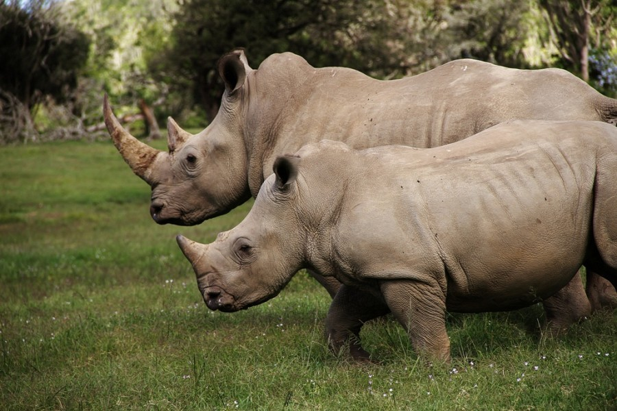 8 Day Eastern Cape Beach & Safari Package  Sibuya White Rhino