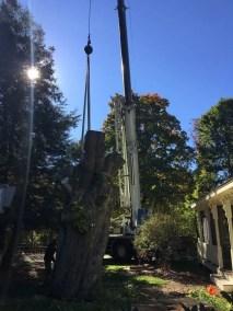002-Tree-Services-East-Coast-Tree