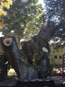 004-Tree-Services-East-Coast-Tree