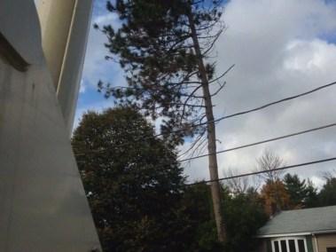 017-Tree-Services-East-Coast-Tree