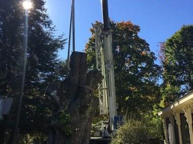 025-Tree-Services-East-Coast-Tree