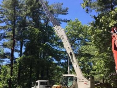 033-Tree-Services-East-Coast-Tree