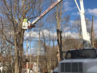 046-Tree-Services-East-Coast-Tree