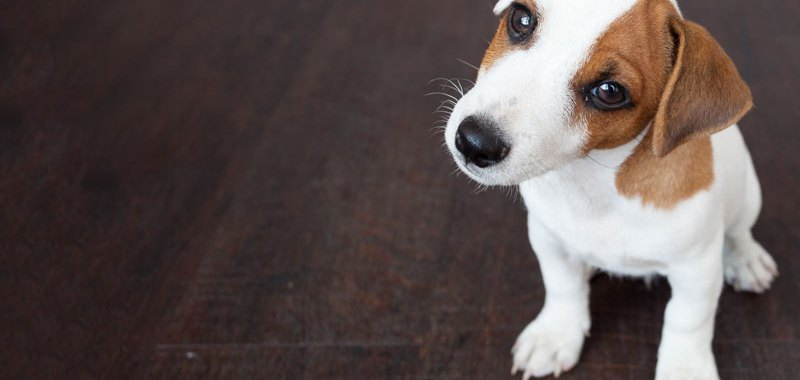 All About Pet Insurance to Keep Your Animals Safe and Secure