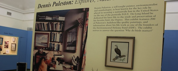 The Suffolk County Historical Museum is hosting an exhibit of Dennis Puleston's bird paintings.