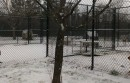 Dogs spent some time in the uncovered runs at the Southold Animal Shelter on a snowy Tuesday this winter.