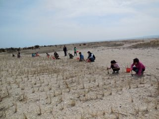 Southold students planted dune grass in Orient on Tuesday | Courtesy Group for the East End