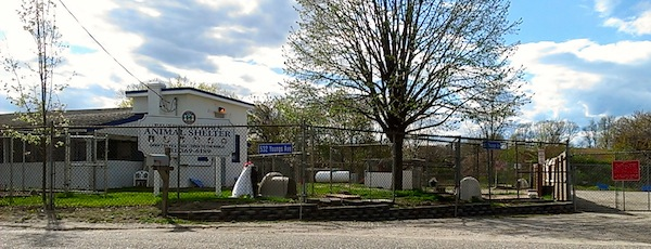 The Riverhead Animal Shelter