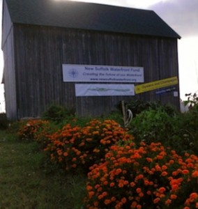 The barn and community garden at the New Suffolk waterfront.