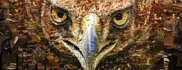 Charis Tsevis for The Audubon Society