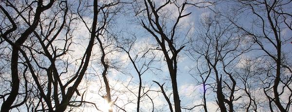Sky full of branches, Downs Farm Preserve