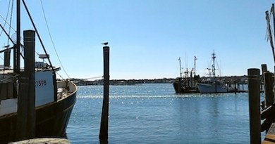 On the commercial dock at the inlet to Lake Montauk.