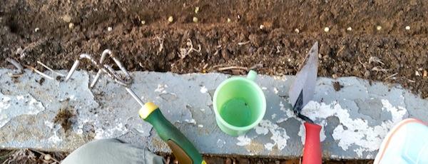 planting peas