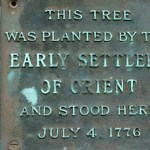 The Buttonwood Tree of Orient
