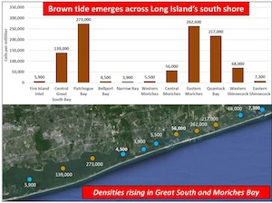 Concentrations of brown tide algae vary greatly in different areas of the South Shore