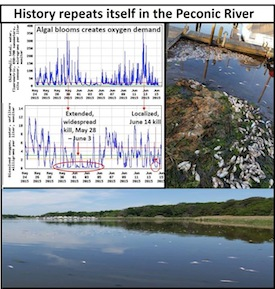 Another smaller menhaden kill occurred in the Peconic River over this weekend.  |  LICCRA graphic