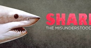 Shark: The Misunderstood Fish
