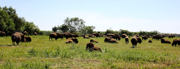 Ed Tuccio's Buffalo, Riverhead