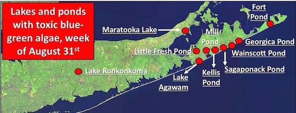 LICCRA's map of Long Island's Blue-Green Algae Bloom