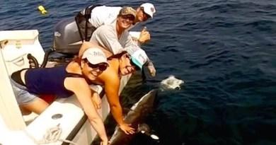 Long Island Shark Collaboration,