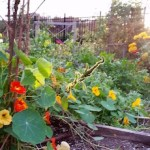 Sunset in the River & Roots Community Garden