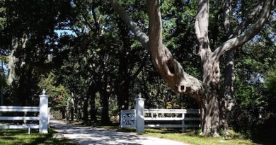 The haunted tree of Cobbetts Lane, Shelter Island