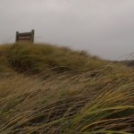 In the Walking Dunes...