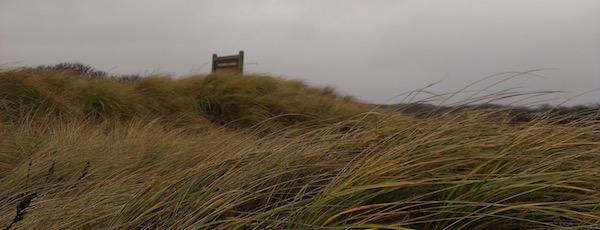 In the Walking Dunes...