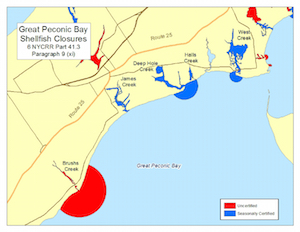 Great Peconic Bay shellfish closures