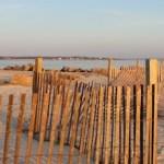 Winter fences