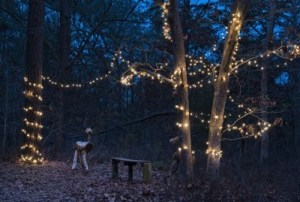 Light the Night at Quogue Wildlife Refuge