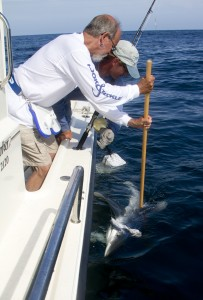 Shark Tagging | FishGuyPhoto