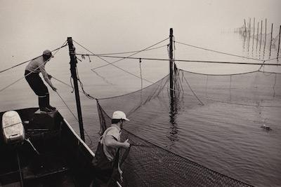 Stuart Vorpahl works his pound traps | file photo