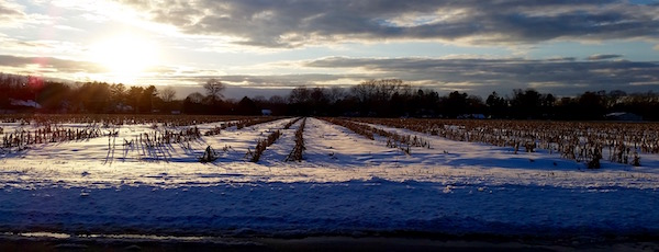 Aftersnow Corn