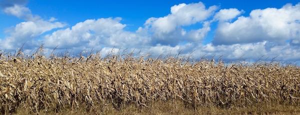 October Corn