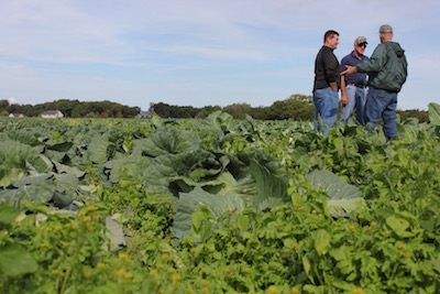 Conferencing in the cabbages.