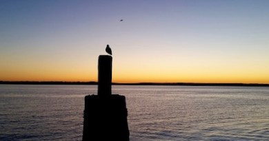 Last bird standing, Tuesday morning.