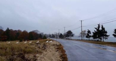 Tuesday on Nassau Point Road.