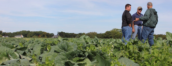 Farmers discussed business at a Peconic Land Trust press conference in Mark Zaweski's cabbage patch this October.