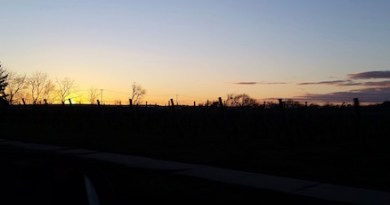 Vineyard sunset.