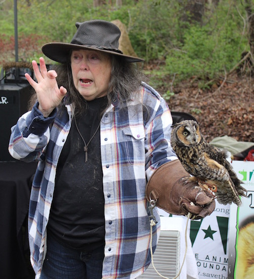 Katherine Schelp of Save The Animals Rescue Foundation with her friend, a long-eared owl, at Group for the East End's Earth Day Celebration at Downs Farm Preserve